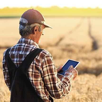 Farmer standing in wheat field with tablet